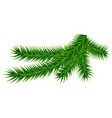 green fir branch isolated on white vector image