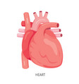 heart human internal organ diagram vector image