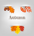 autumn collection vector image vector image