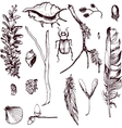 set of forest objects vector image