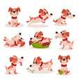 cute jack russell terrier characters set funny vector image