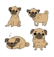 Cute Pugs Dogs vector image