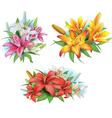 Arrangement from lilies flowers vector image vector image