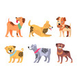 Playful padigree dogs with unusual fur color set vector image