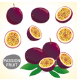 Set of passion fruit in various styles vector image