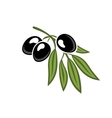 Black olives on a leafy twig vector image vector image