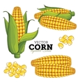 Corn Isolated on White Background vector image