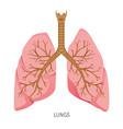 lungs human internal organ diagram vector image