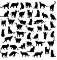 Cat and Activity Pet Animal Silhouettes vector image