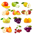 group with different fruits vector image vector image