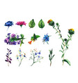 set of watercolor drawing wild flowers vector image