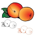 Two peaches with leaves of different styles vector image