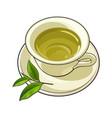 china porcelain cup saucer fresh green tea leaf vector image