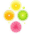 Cocktail elements for design vector image vector image