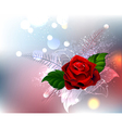 Red Rose vector image