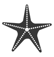 isolated beach starfish graphic vector image