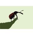beetle on leaf vector image