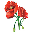 Red Poppy Flowers vector image