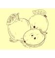 Apple sketch vector image