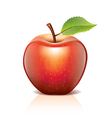 object red apple vector image vector image