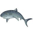 Tiger shark vector image