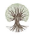 big oak tree vector image