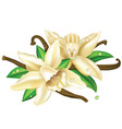 vector vanilla flowers vector image