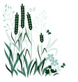 wild grasses vector image