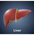 realistic human liver isolated on dark gray vector image