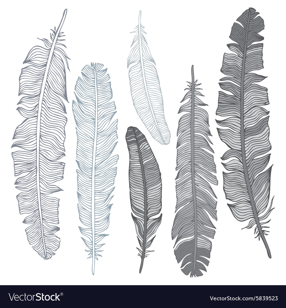 Beautiful vintage feathers vector