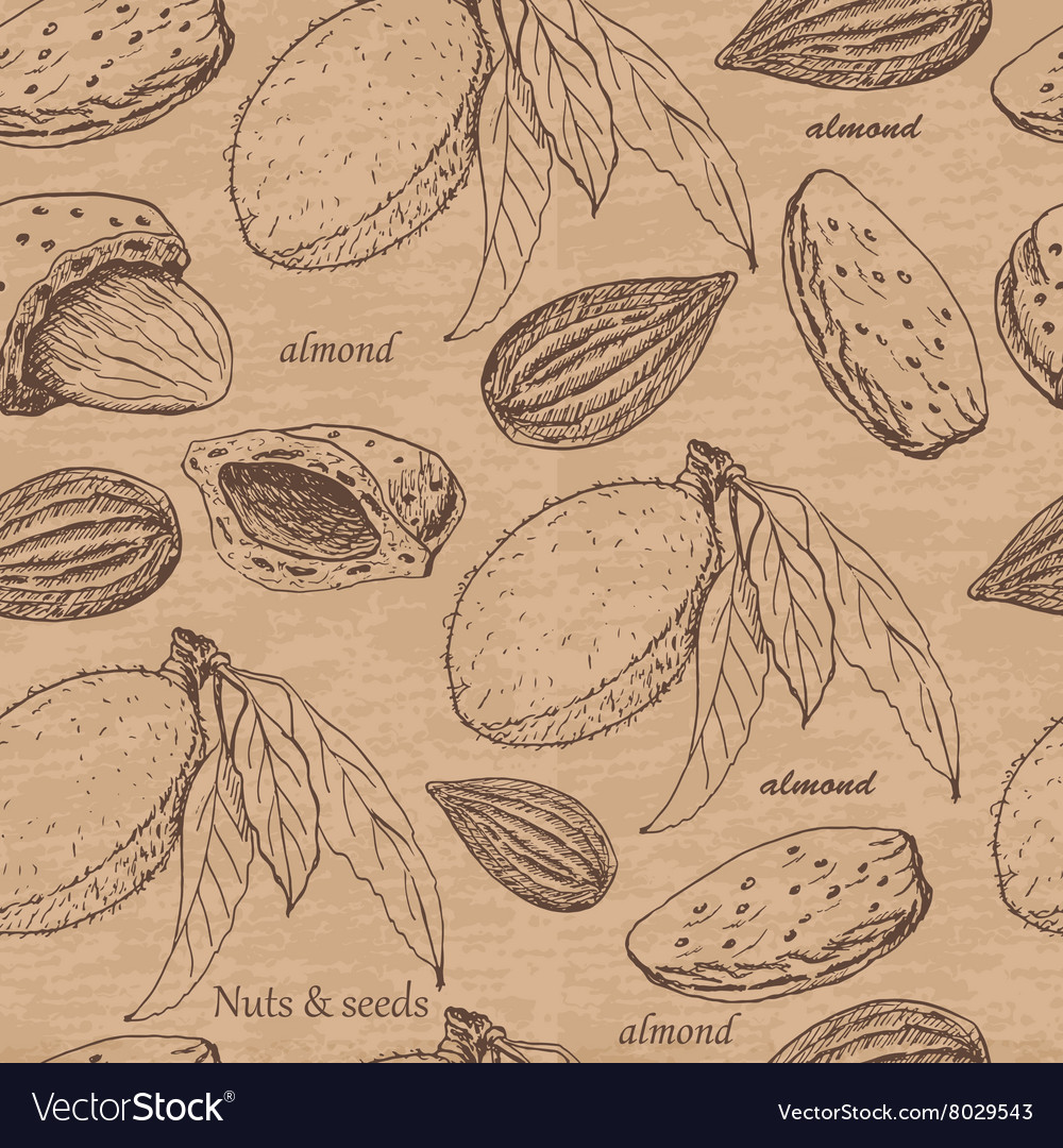 Seamless pattern with almonds on beige background vector