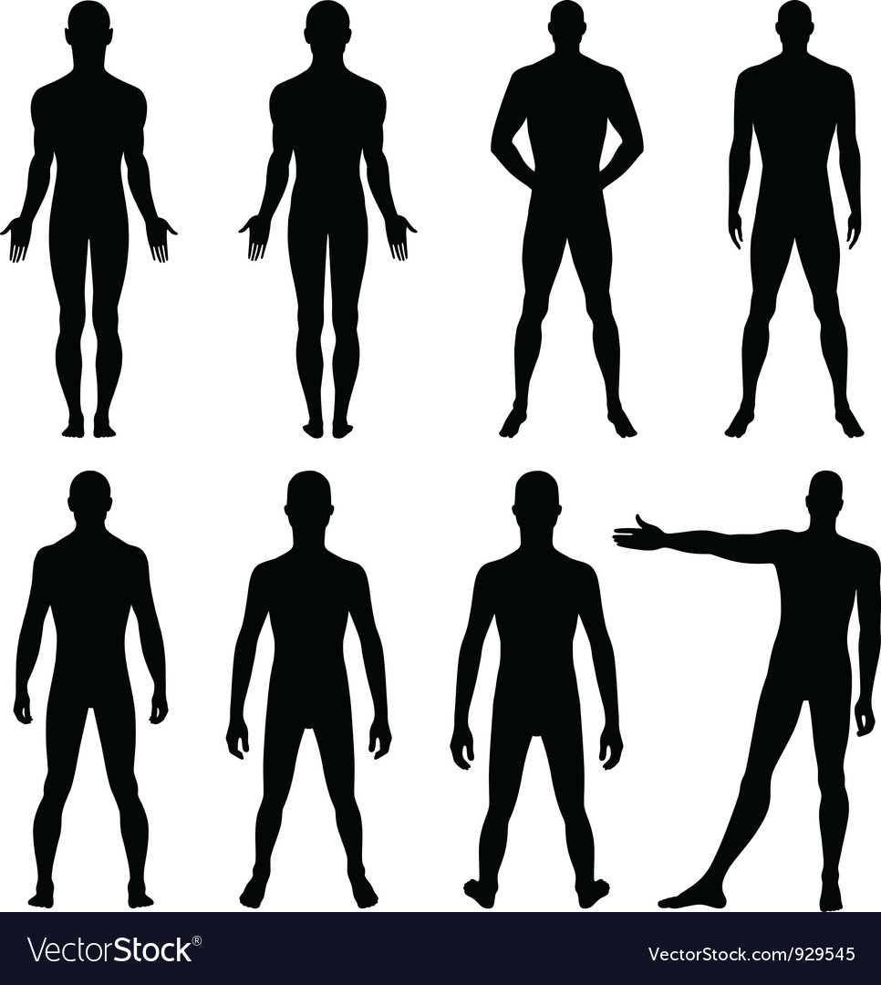 Full length front back silhouette of man vector