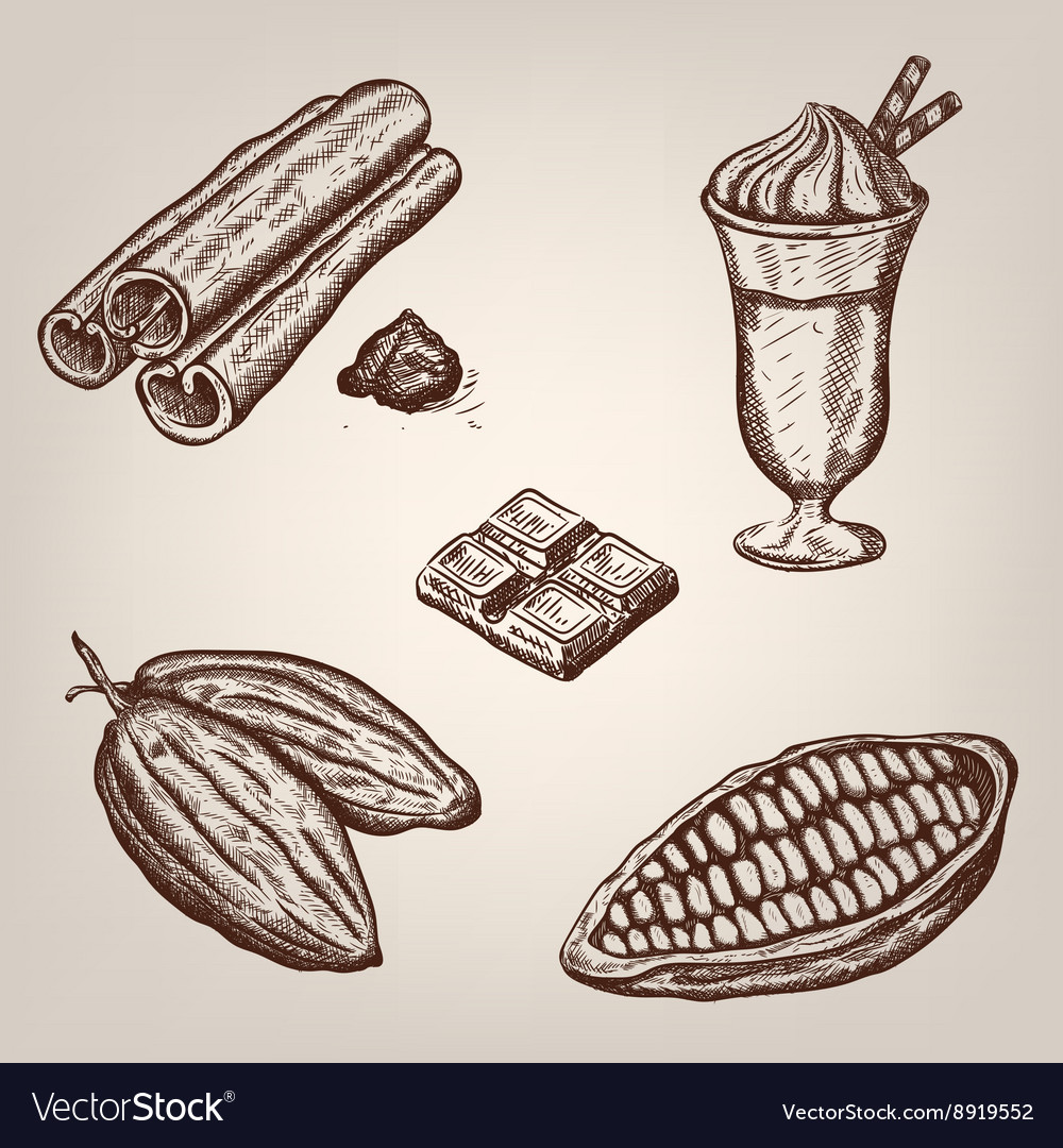 Hand drawing of cacao beans vector
