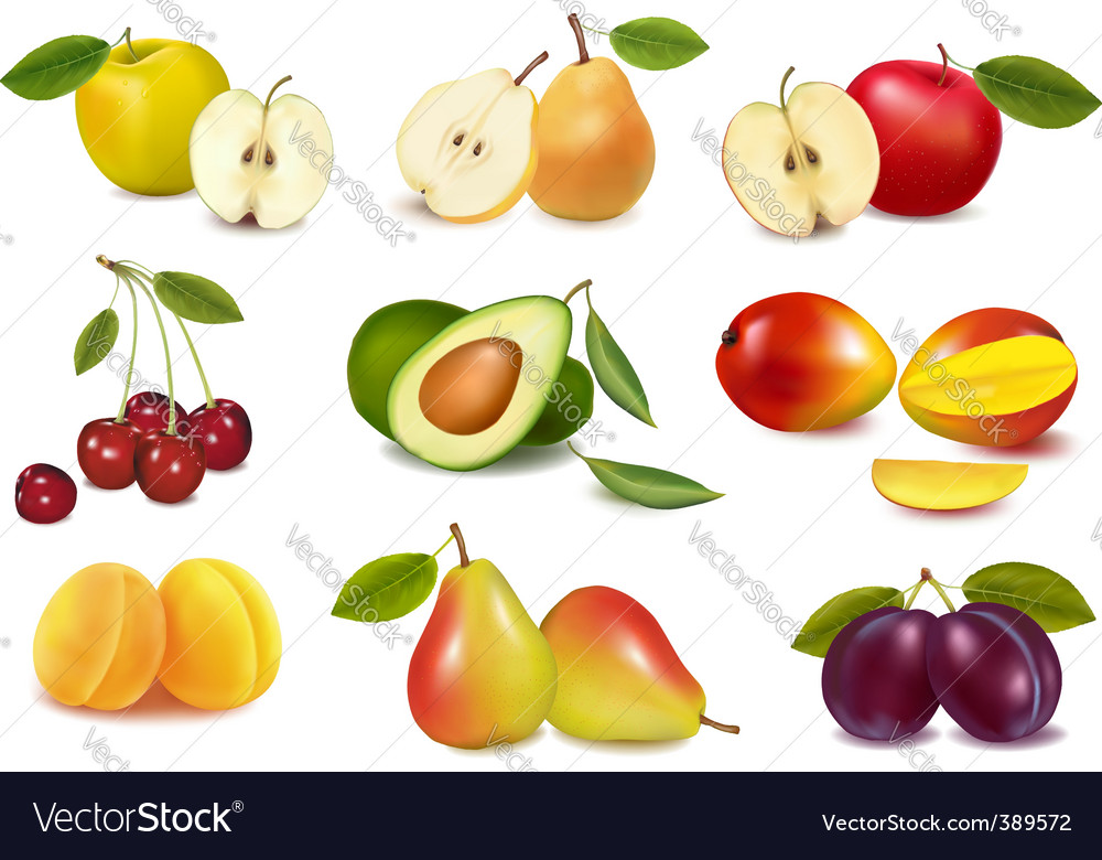 Super group colored fruits vector