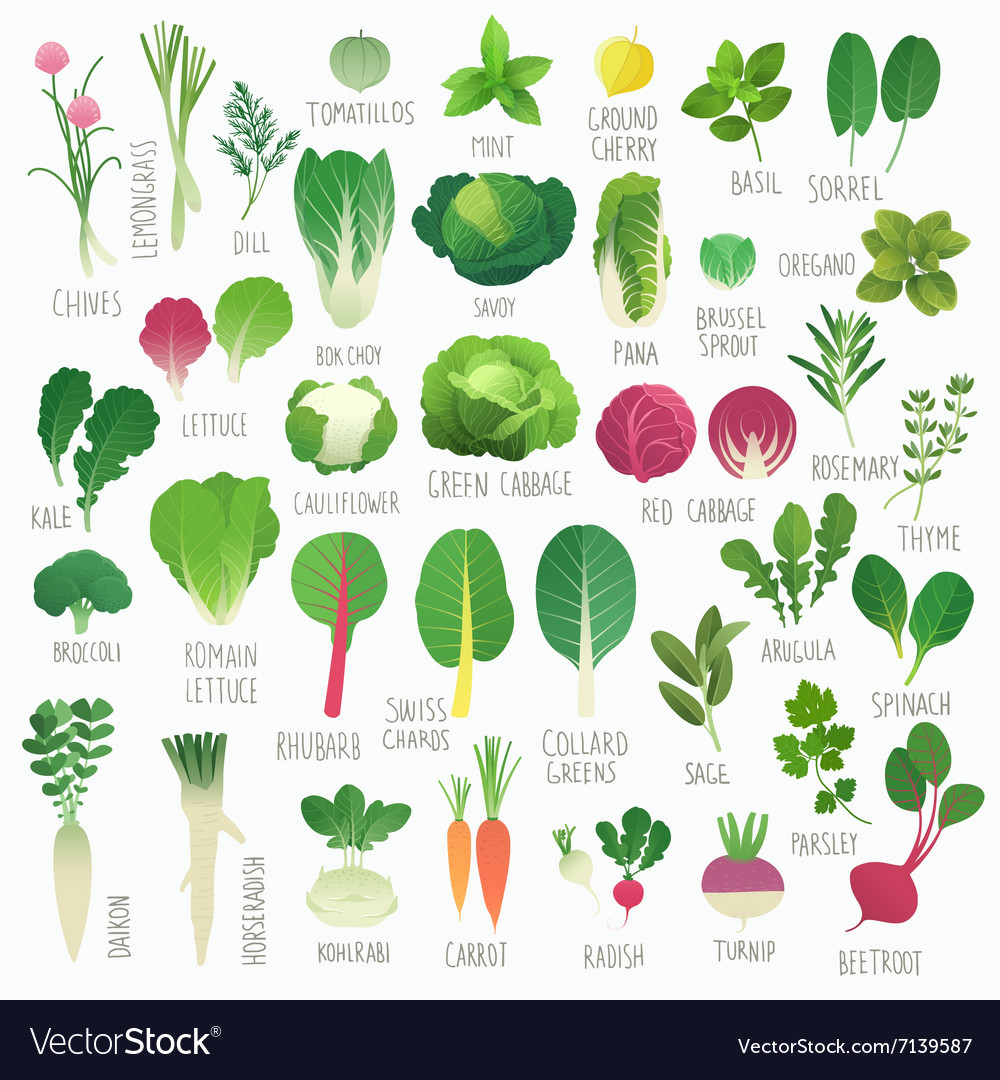Food vol 1 vegetables and herbs vector