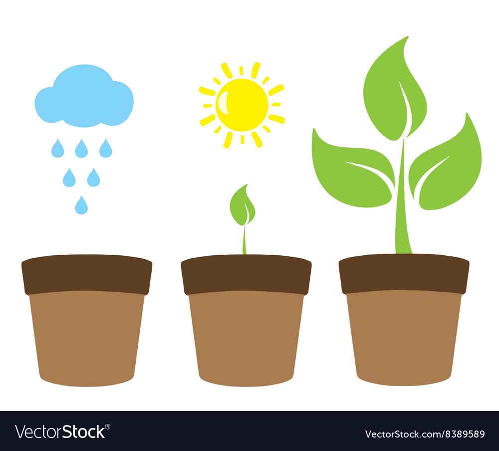 Green plant tree vector