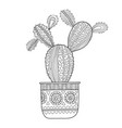 cactus succulent black and white vector image