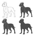 set of with a pit bull dog vector image