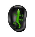 lizard lying on the stone vector image