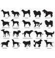 set of dogs silhouettes-3 vector image