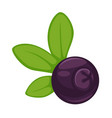 Blueberry dark purple fruit with green leaves vector image