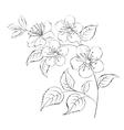 Spring cherry blossom sakura vector image vector image