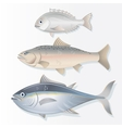 Set of Edible Fishes Dorado Salmon and Tuna vector image vector image