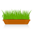 green grass in clay pot isolated vector image