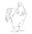 cockerel vector image vector image