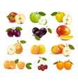 group with fruits vector image vector image