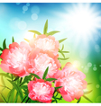 peony flowers vector image vector image