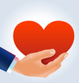 Male hand holding deep red heart vector image