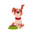 jack russell terrier character eating food cute vector image