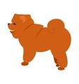 Flat pet chow vector image
